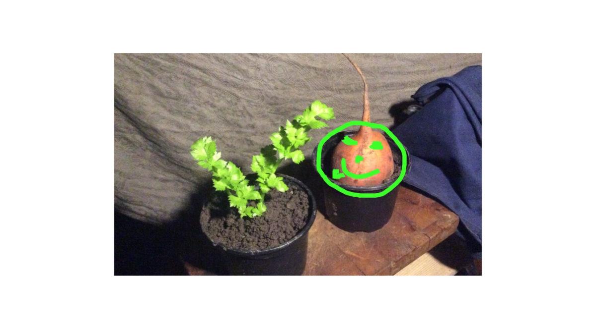 Samenfestes Saatgut, was ist das und wieso ist das wichtig?