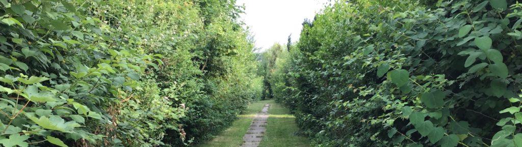 Gartenweg einer Kleingartenanlage