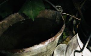 Nachts-Gießen ist äußerst effektiv bei starker sommerlicher Trockenheit