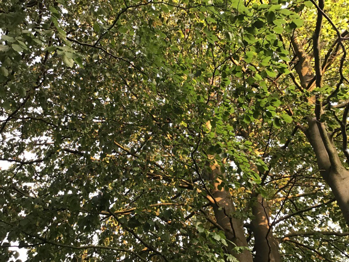 Von Bäumen, Glaubwürdigkeit, Symbolen und Menschen